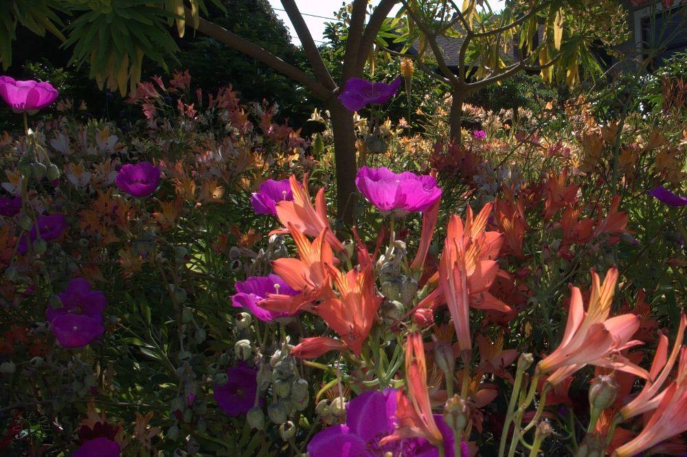 Photo in Cityscape #berkeley #wild flowers #lawn #rodni