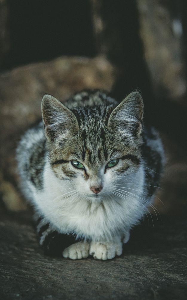 Photo in Animal #cat #kitty #kitten #animal
