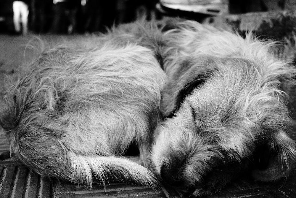 Photo in Animal #blackandwhite #animal #dog