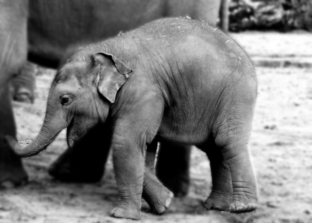 Photo in Animal #baby elephant #animal #zoo