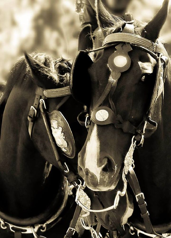 Photo in Animal #horses