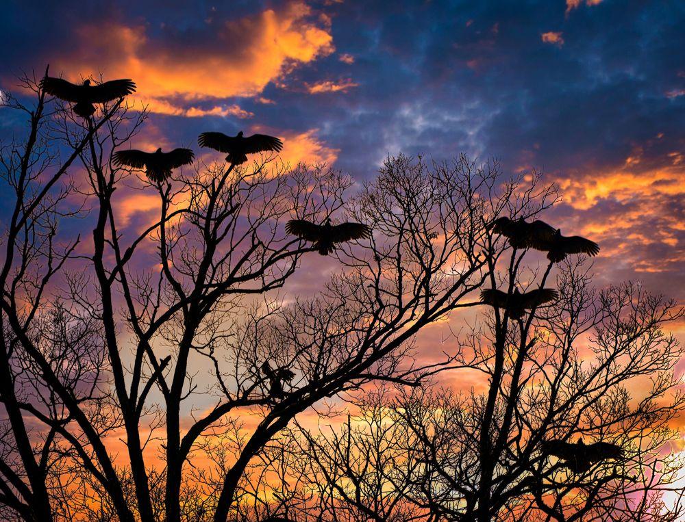 Photo in Landscape #hdr #va #landscape #vultures