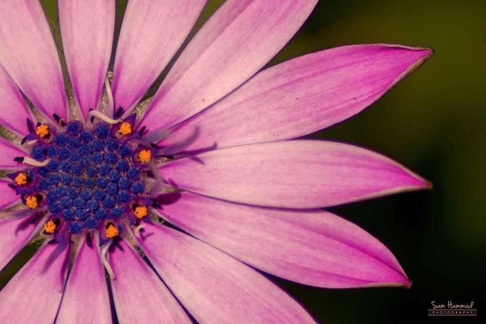 Photo in Macro #flower #violet #spring