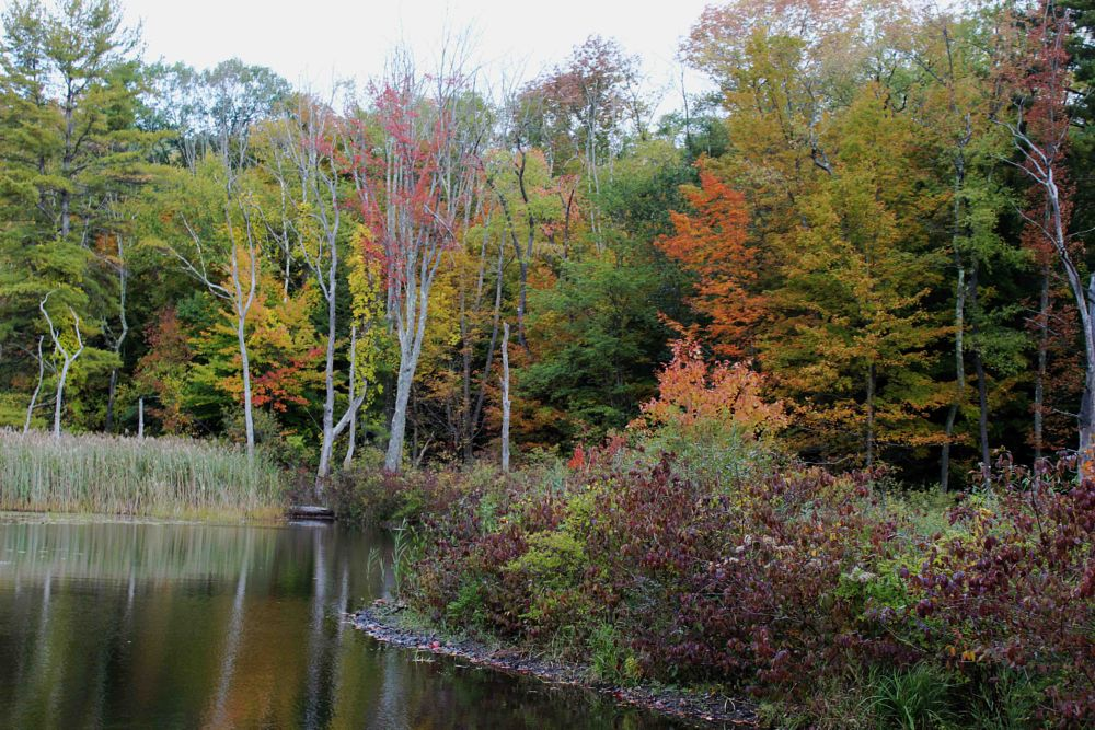 Photo in Nature #nature #water #lake #autumn #fall #color #trees #reflection
