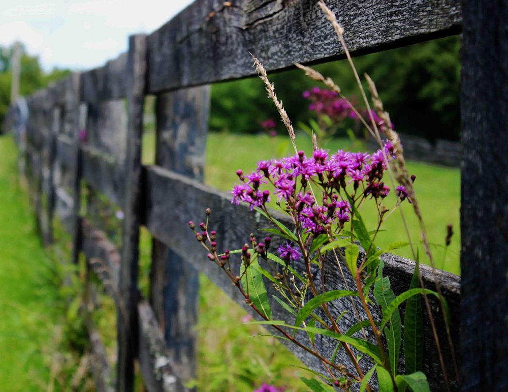 Photo in Landscape #fence #flowers #wildflowers #farm #country