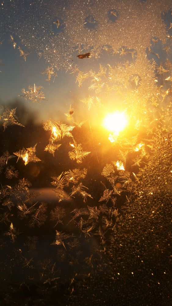 Photo in Nature #frost #sunrise #window