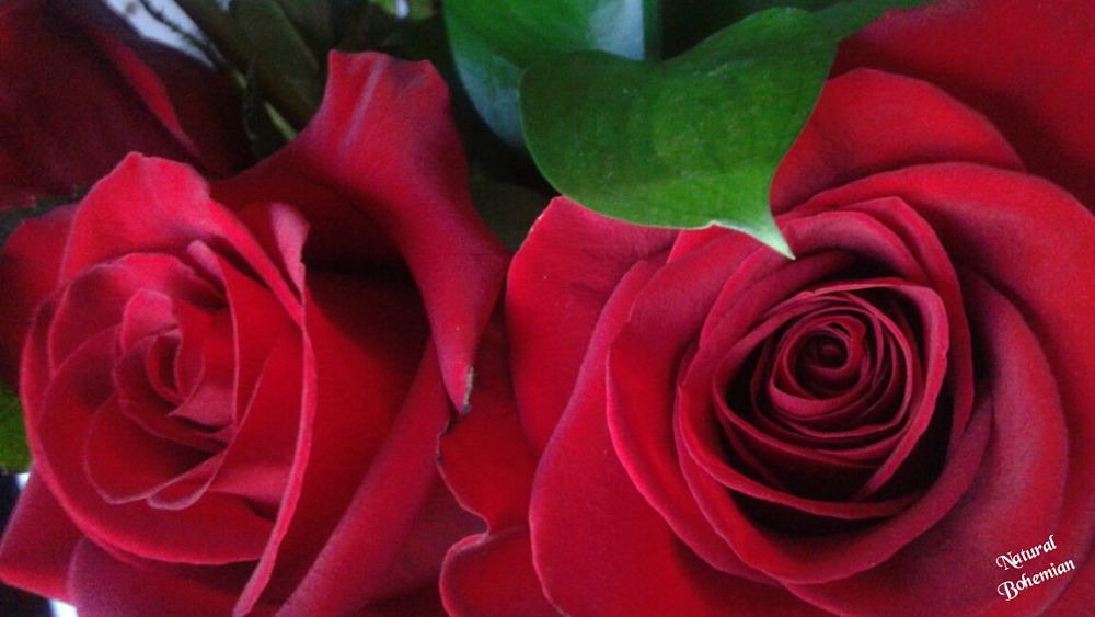 Photo in Nature #roses #red #flowers