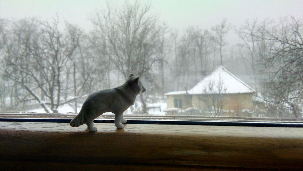 Photo in Random #fox #snow #snowing