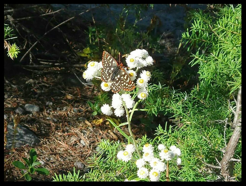 Photo in Random #butterfly #nature #beauty