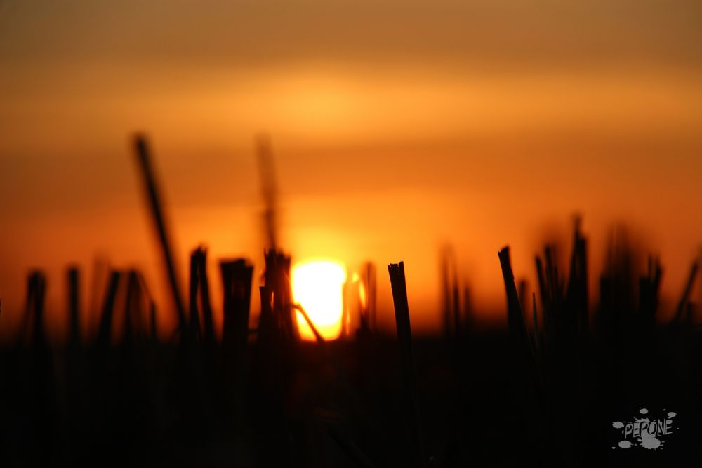 Photo in Random #soleil #champs #musaraigne