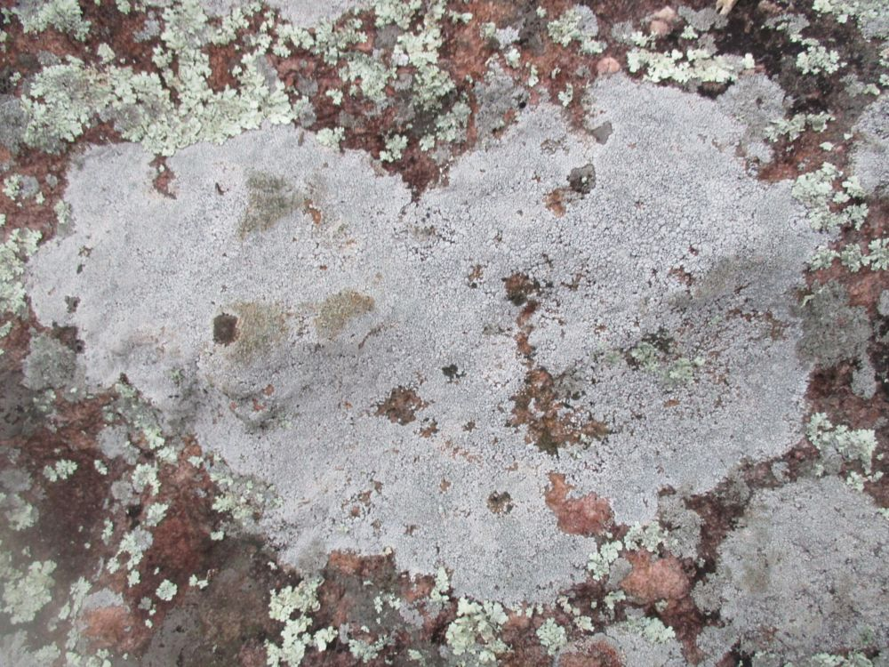 Photo in Abstract #lichen #gneiss #hearts #texas #inks #lake #state #park #devils #waterhole