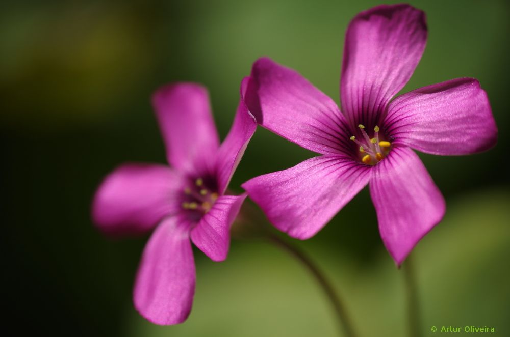 Photo in Macro #silky #satin #jardim botânico #lisboa
