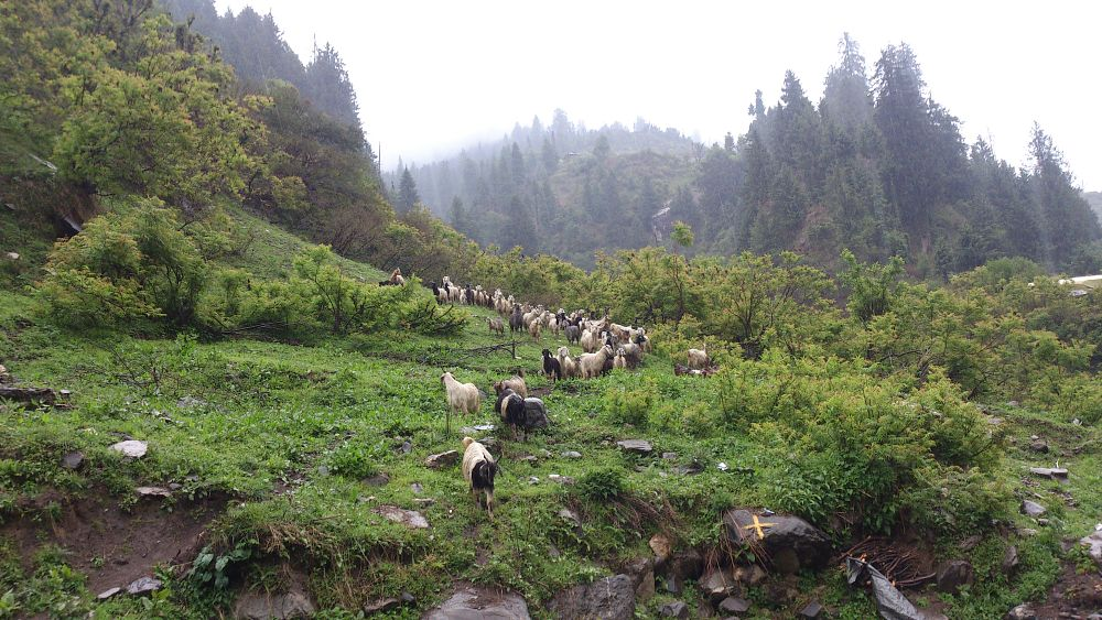 Photo in Animal #parvati valley #montain goat