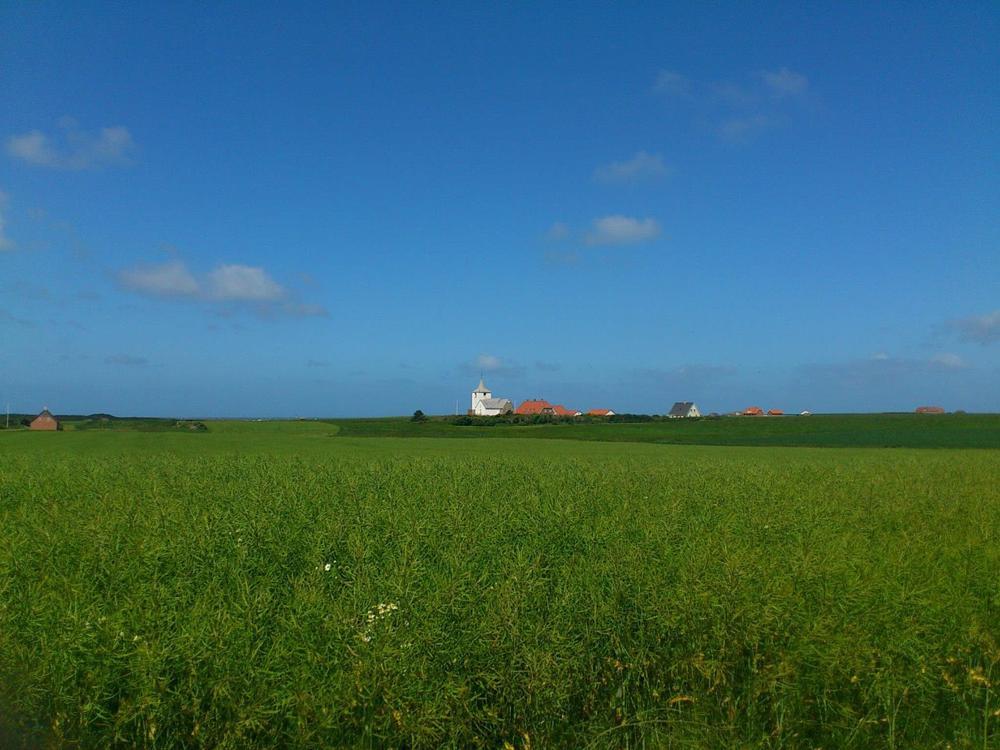 Photo in Random #visitcontest #denmark #scenic #summer #sommer #jutland #countryside #westcoast #natural #nature