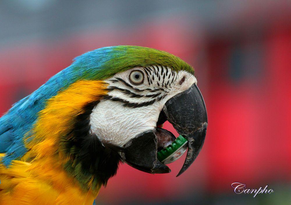 Photo in Animal #bird #macaw #photographer #nature #wildlife photography #red #yellow