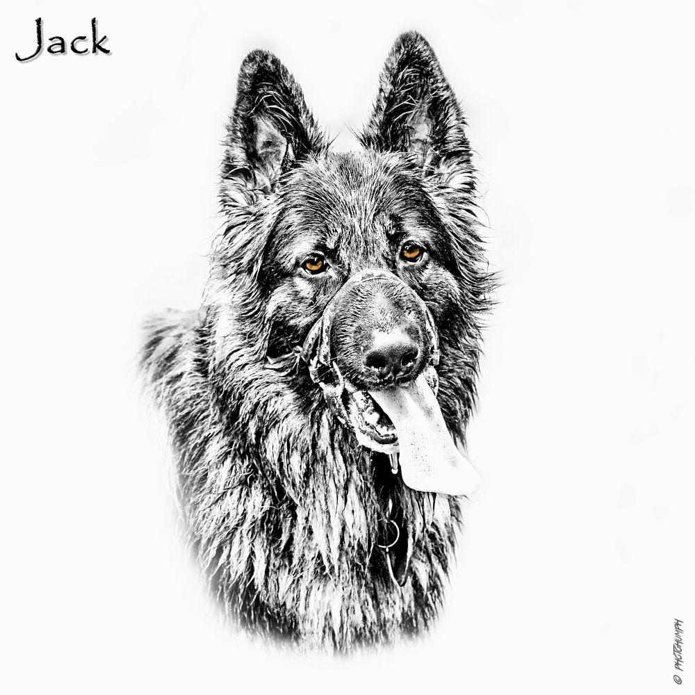 Photo in Animal #deutsch schäferhund #photohumph #german shepherd #dog #pet #alsation #portrait