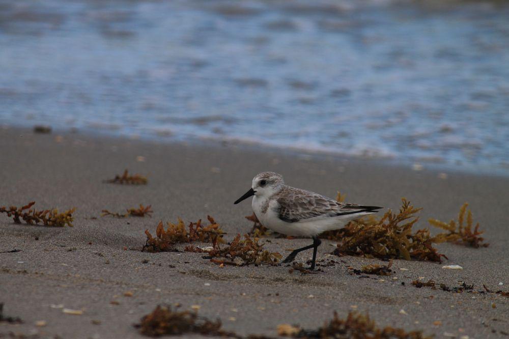 Photo in Animal #beach #hollywood #ocean #florida #bird #nature