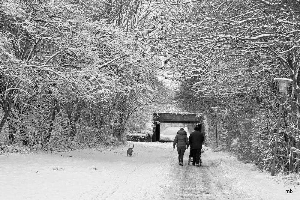 Photo in Street Photography #denmark #sönderborg #snow #christmas #monochrome #monochromephotography #streetphotography #denmörk #blackandwhite #people #dog #walking #path