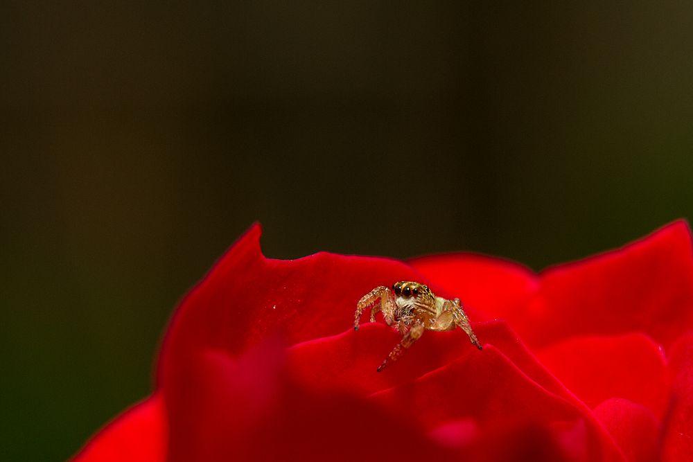 Photo in Animal #macro #spider #photo #red #eyes #nice