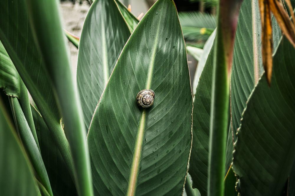 Photo in Macro #snail #leaf #green #macro #hadi #morovat #nikon #d5200 #chalus