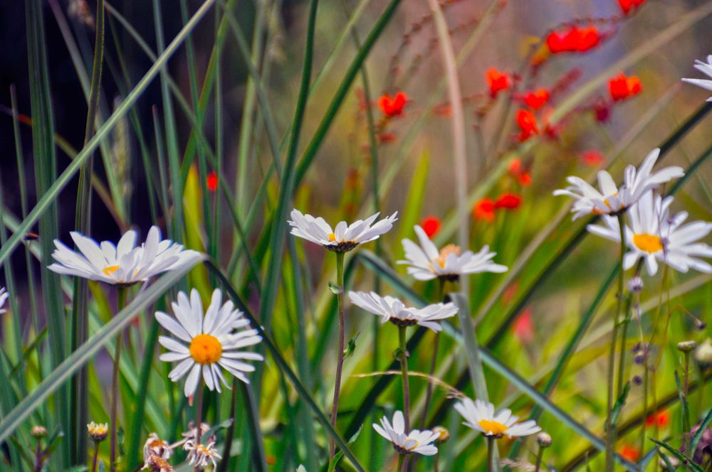 Photo in Random #flowers #nature #colors