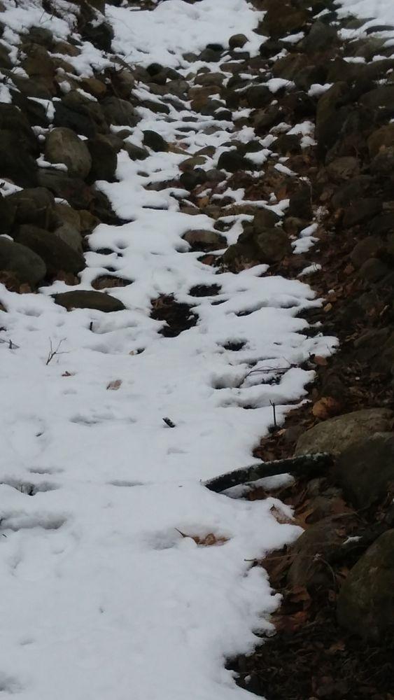 Photo in Nature #artfromperry #winter stream #stream #waterless stream