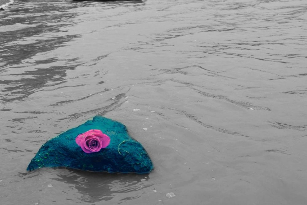 Photo in Nature #pink #rose #water #river