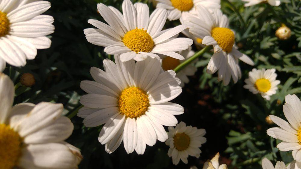 Photo in Macro #white #flowers #spring #springtime #april #springflowers #bloom