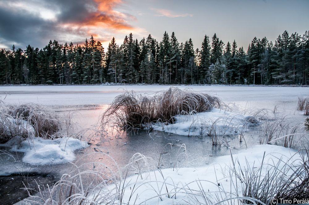 Photo in Landscape #ristijärvi #lumi #lake #swamp #snow #ice #forest #woods