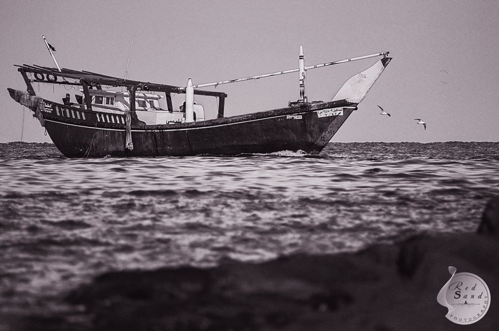 Photo in Black and White #sepia #old fashion #sea #birds #sailing #nature #rock #red sand #beauty