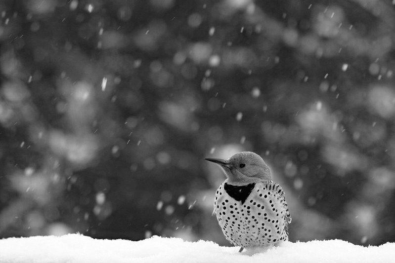 Photo in Random #flicker #bird