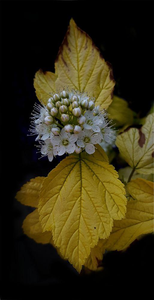 Photo in Macro #flower #flowers #close up #macro #samsung phone #shadow