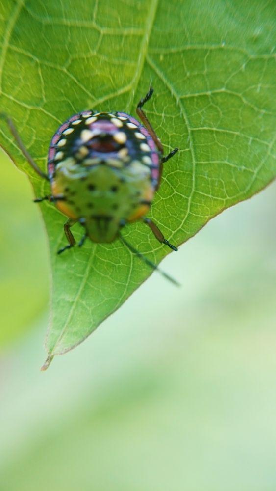 Photo in Random #macro #natureza #máscara #verde #planta #inseto #animal