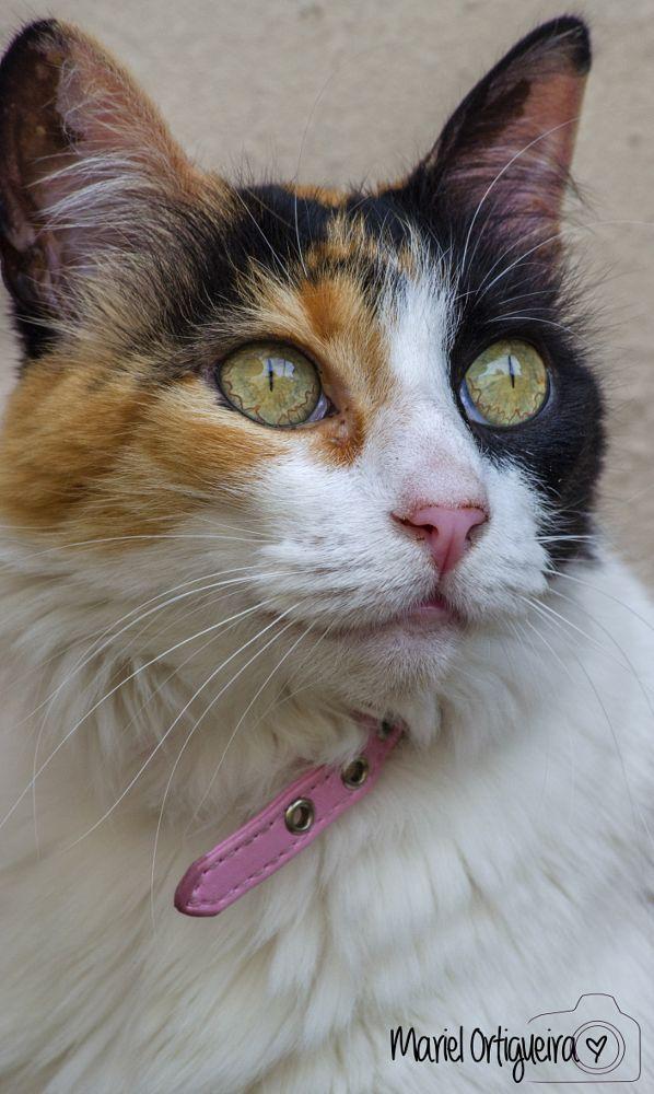 Photo in Animal #cat #gato #animal