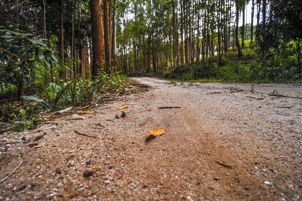 Photo in Random #estrada #caminho #travel