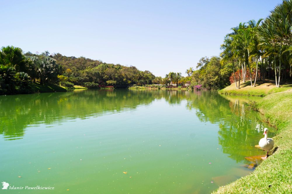 Photo in Nature #inhotim #parque ecologico
