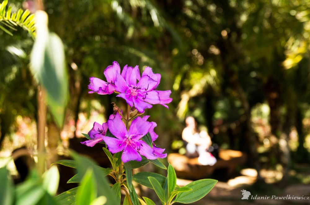 Photo in Nature #flor #flower