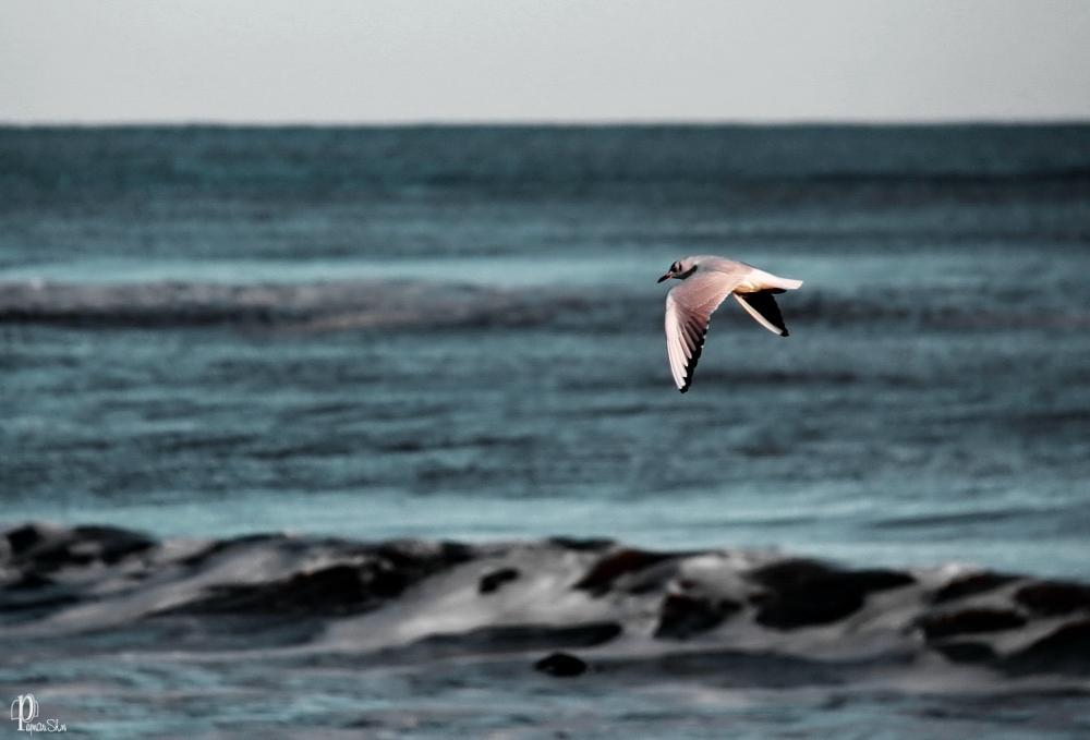 Photo in Random #fly #animal #bird