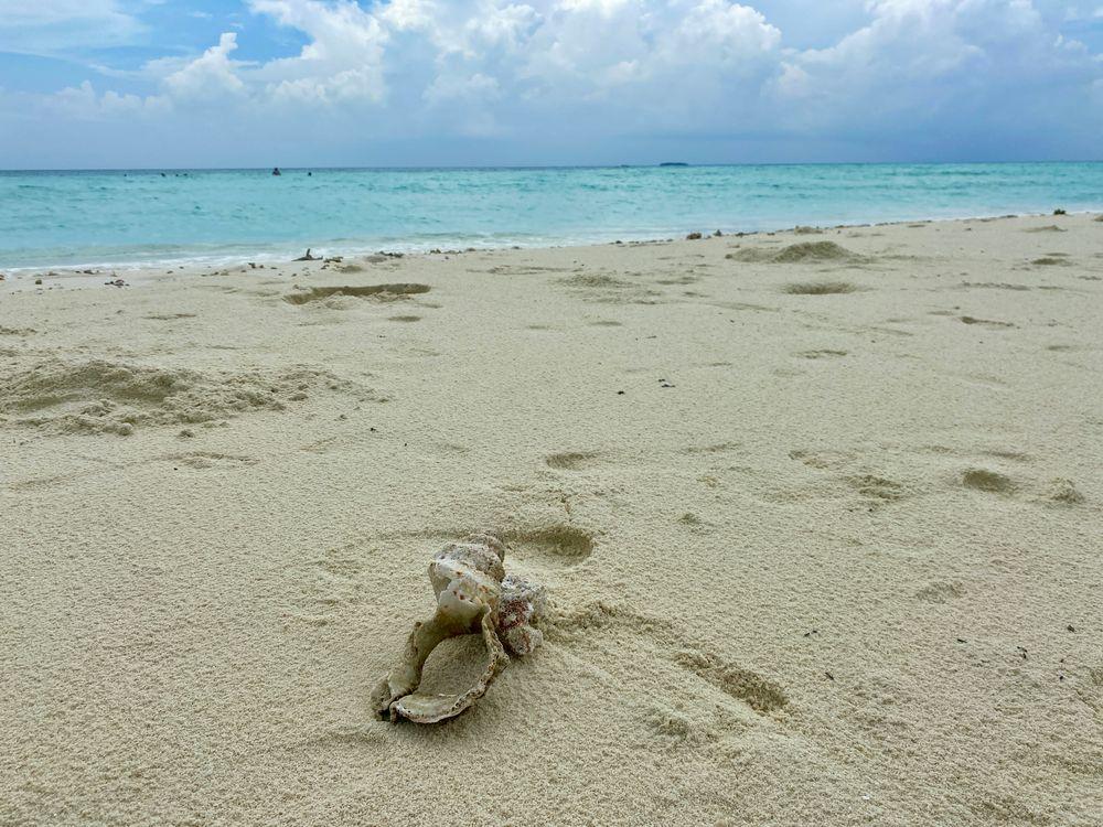 Photo in Nature #sea #indian ocean #sky #sandy #maldivi #blue #white #shell #sunset