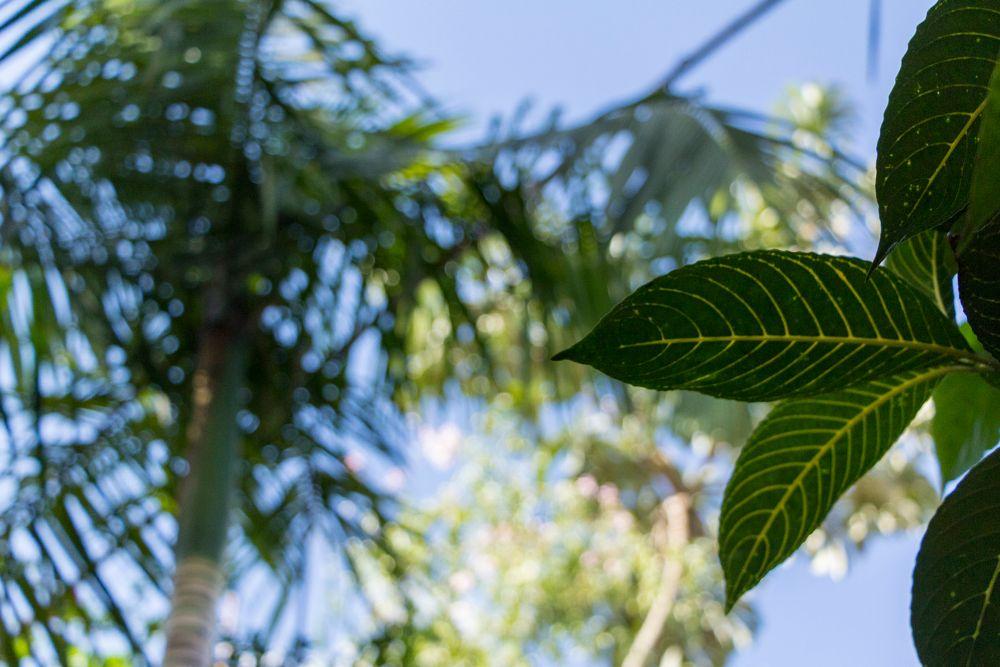 Photo in Random #misiones #2015 #vacaciones #naturaleza #nature