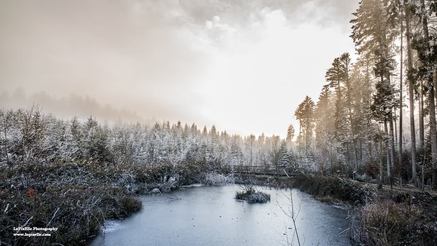Photo in Landscape #landscape #paysage #nature #eart #winter #forêt #lac #lake #trees #pond #frosted #hiver #sky #ciel #nuage #cloud #fog