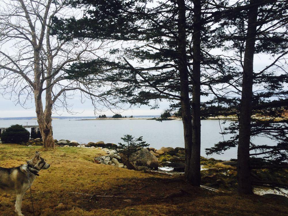 Photo in Landscape #husky #atlanticocean #peaceful