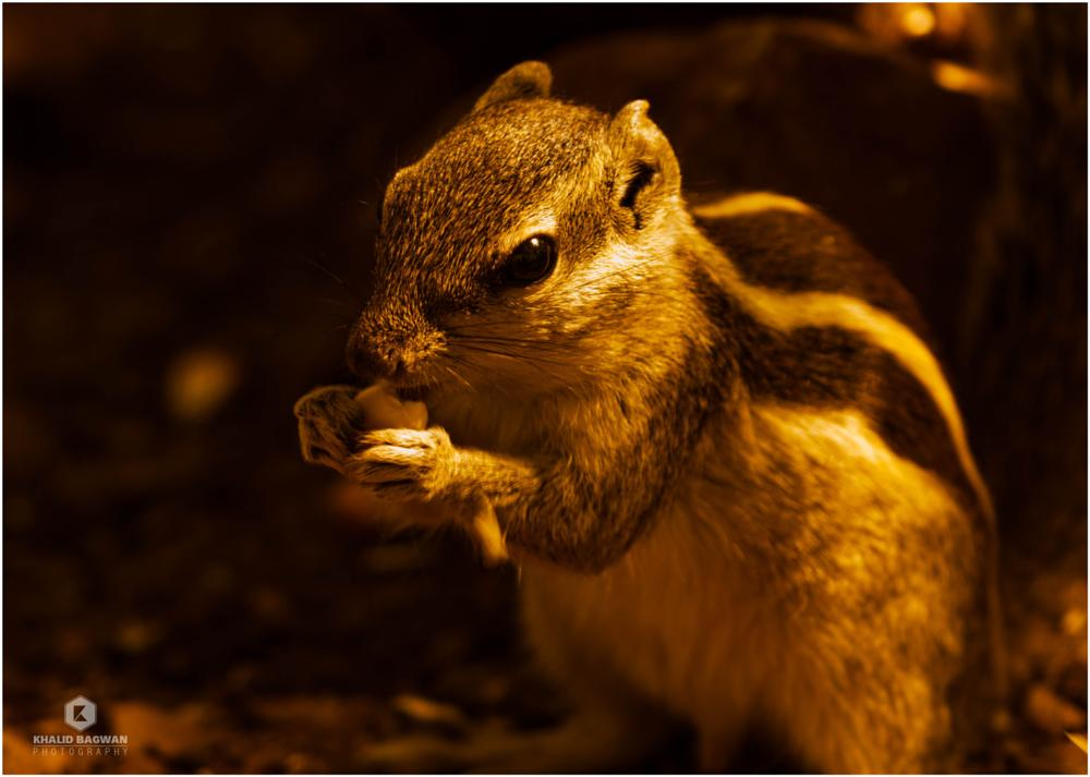 Photo in Animal #animal #squirrel #pune