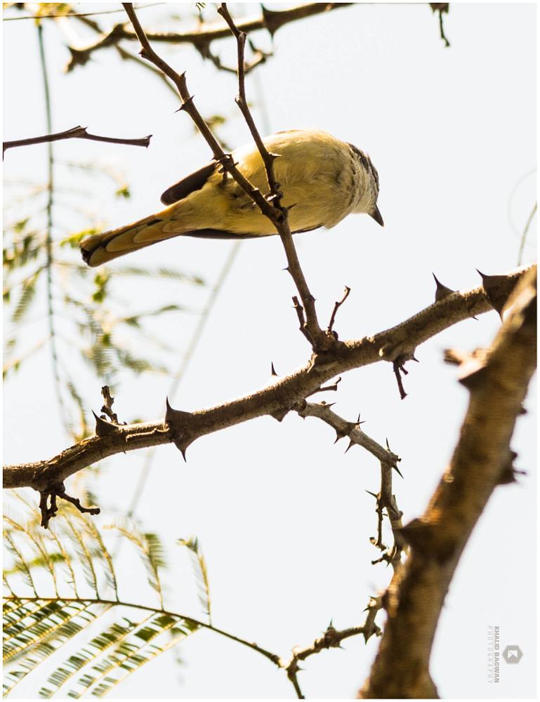 Photo in Animal #bird #pune #taljai pathar #nikon d3200
