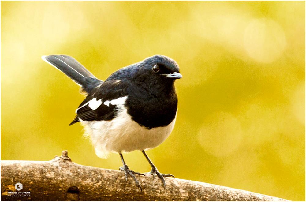 Photo in Animal #bird #taljai pathar #pune #nikon d3200