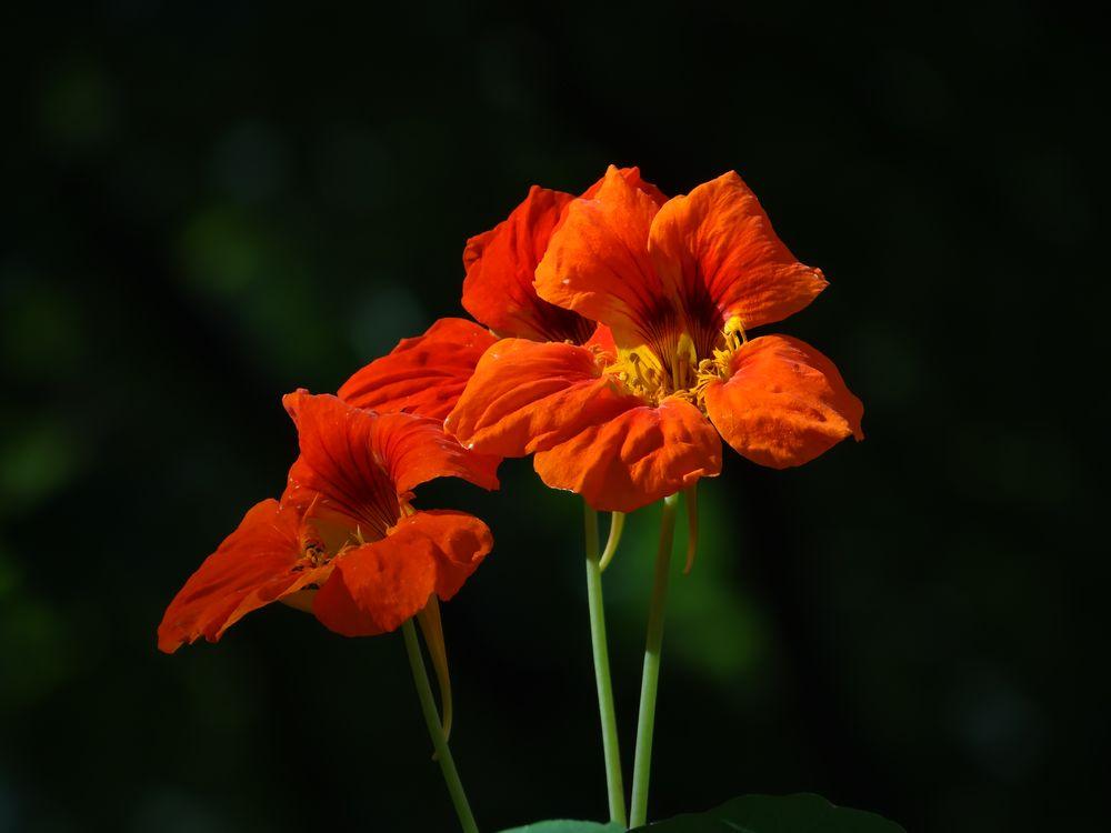 Photo in Nature #close-up #close-up flowers #va usa