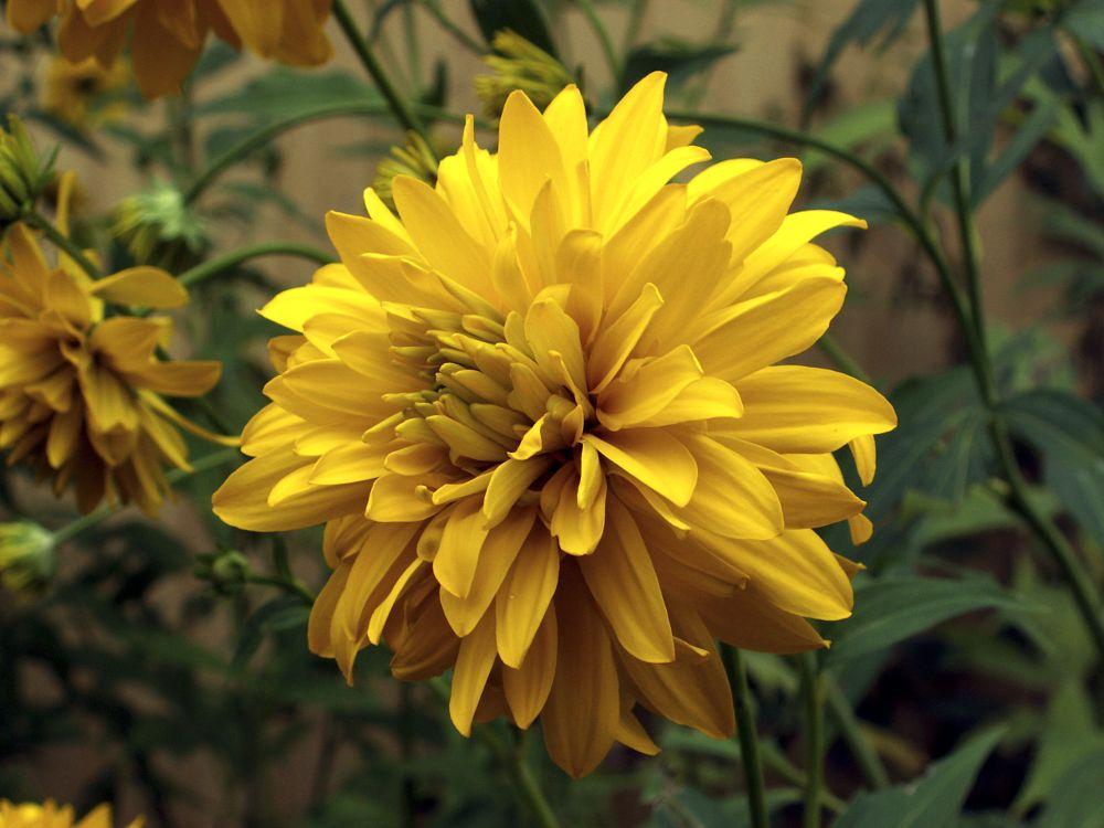 Photo in Macro #summer flower