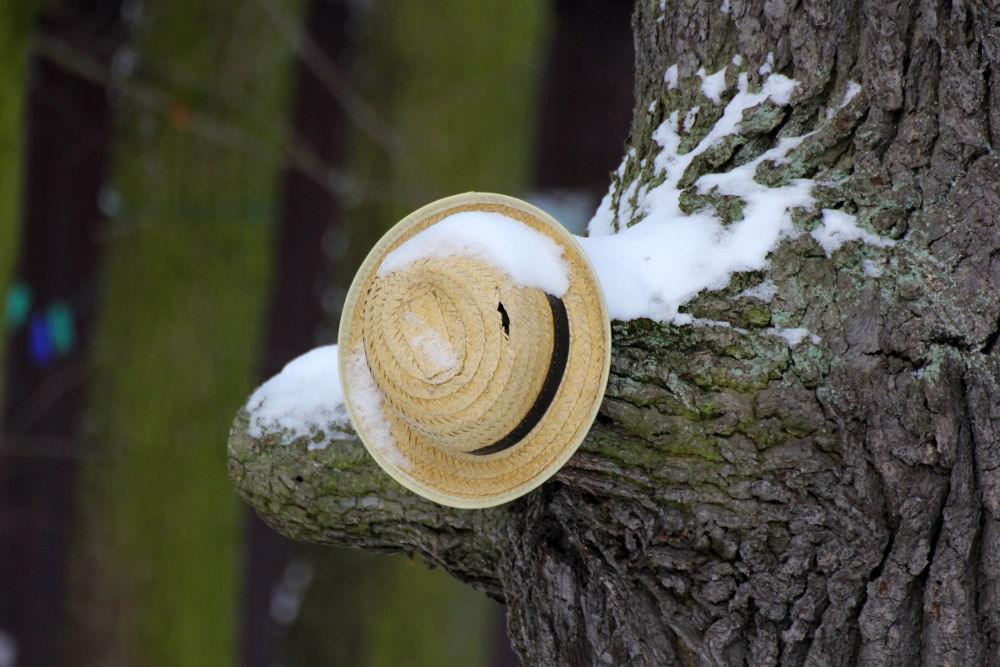 Photo in Random #winter #snow #tree #hat