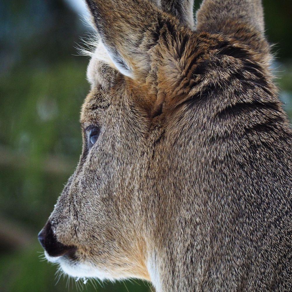 Photo in Animal #animal #norge #norway #natur #dyr