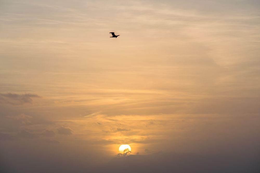 Photo in Animal #sunset #bird #sky